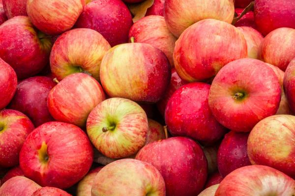 Pommes BIO Melrose