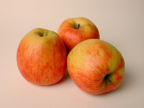 Pommes BIO Jubilé